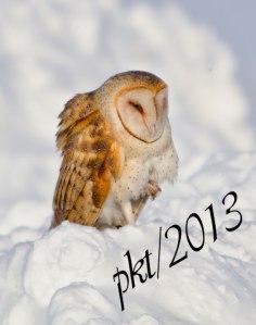 DSC_0095web-barn-owl-talon-raised