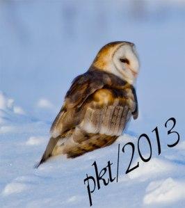 DSC_0214web-barn-owl