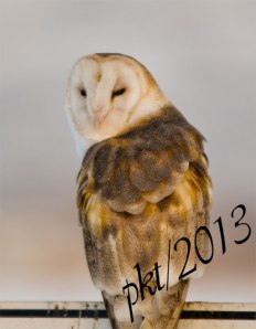 DSC_0324web-barn-owl-sign