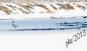 DSC_0846web-swans-ducks