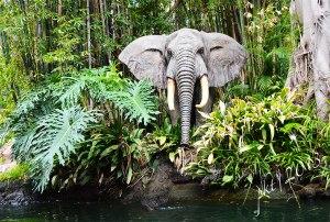 DSC_2998jungle-elephant