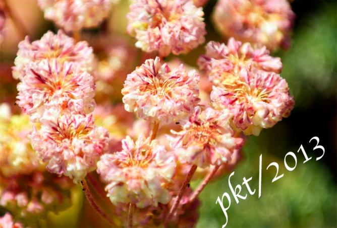 _DSC0829 copy.wildflowers