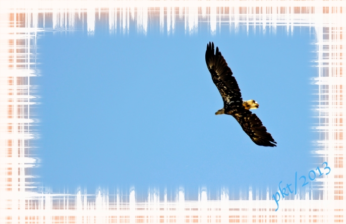 _DSC1704.bird with border