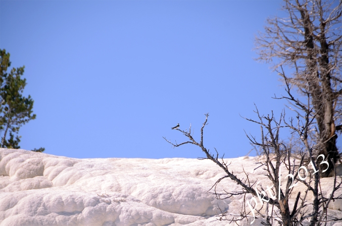 DSC_9462.mammoth bird