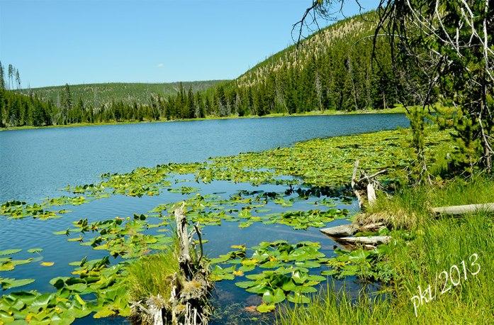 DSC_9828lily-pond