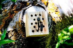 _DSC3159native-beehive