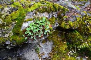 _DSC6755.moss on rocks