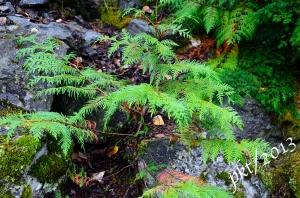 _DSC6760 copy.trees against rocks