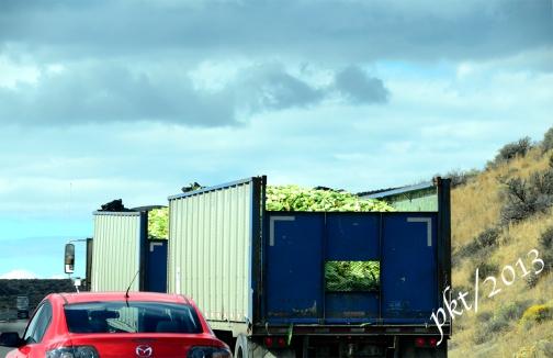 _DSC8063Washington state corn truck