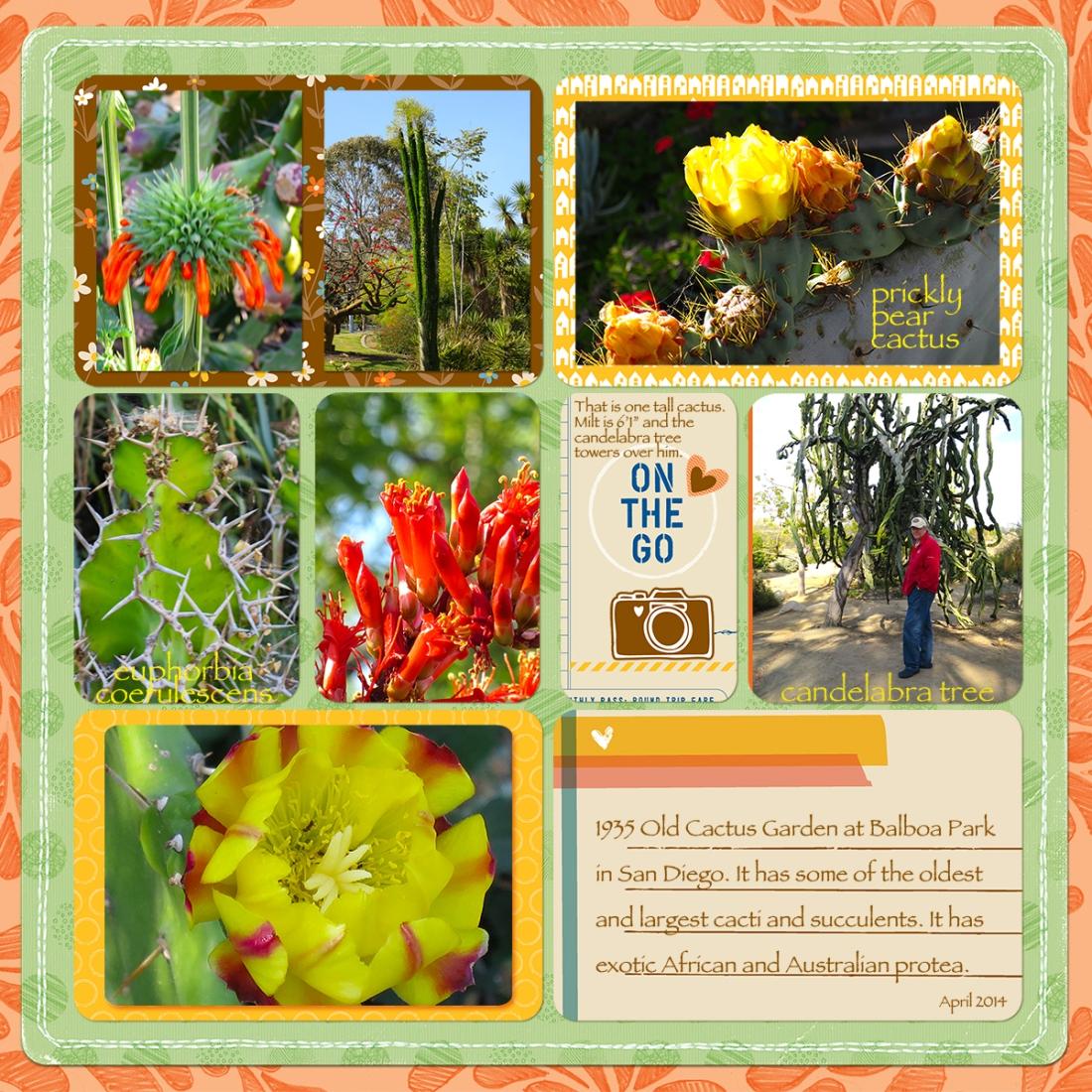 web cactus garden San Diego-ProjectLifeTemplate2013