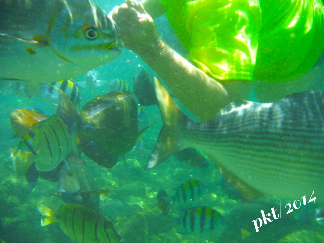 web snorkeling DSCF4370