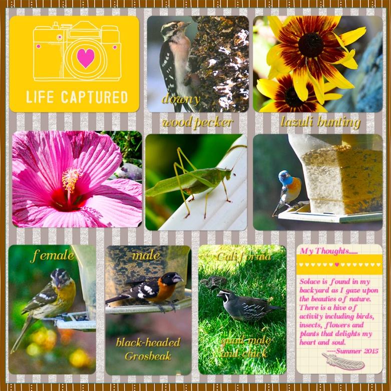 web birds yard PL (2)