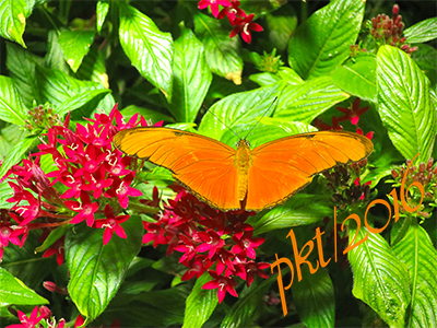 web dyrus iulia orange butterfly sig IMG_0115_3