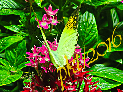 web green butterfly sig  IMG_0088_4