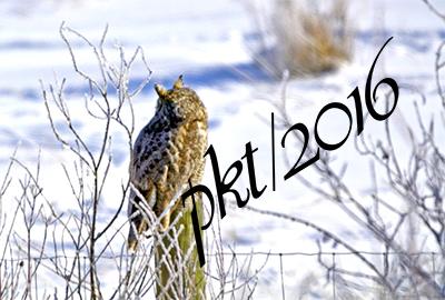 web owl ears sig_DSC8263