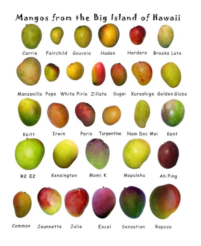 hawaii-mango-types