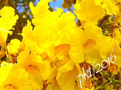 web golden shower closeup sig IMG_0214