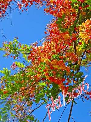 web rainbow shower tree sig IMG_0429