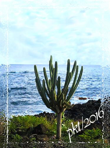 web ocean cactus Kauai frame sig IMG_8281
