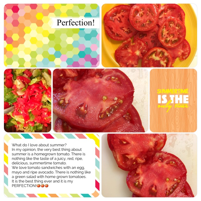 tomato 12 project-life