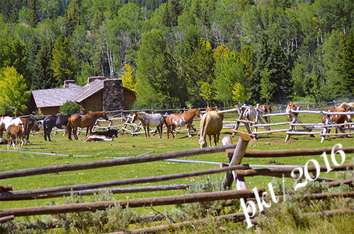 web horses red hills ranch_DSC4067