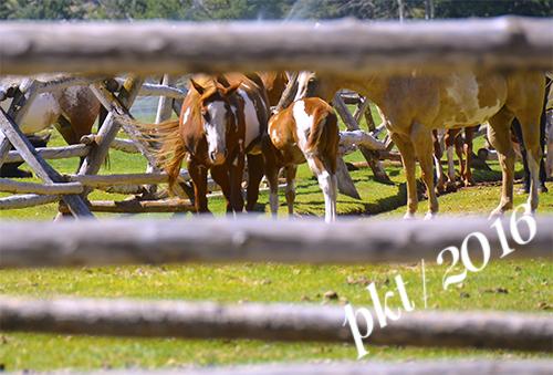 web mom foal nursing_DSC4101
