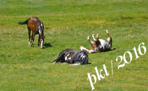 web_horse rollingDSC4268