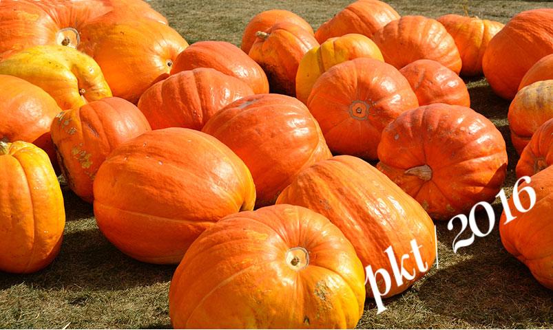 pumpkins_dsc5335-sig