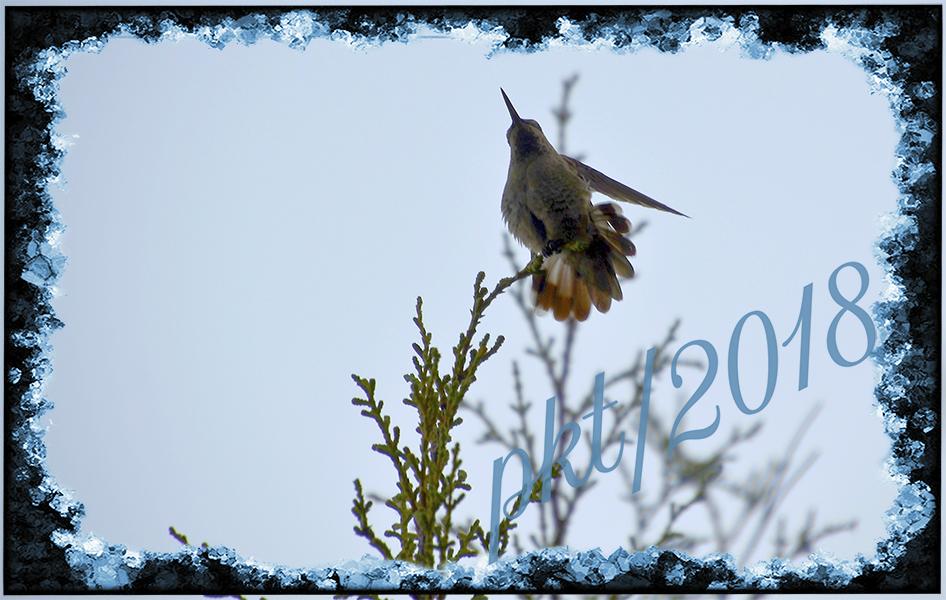 web hummingbird at dusk sig_DSC7665-Recovered